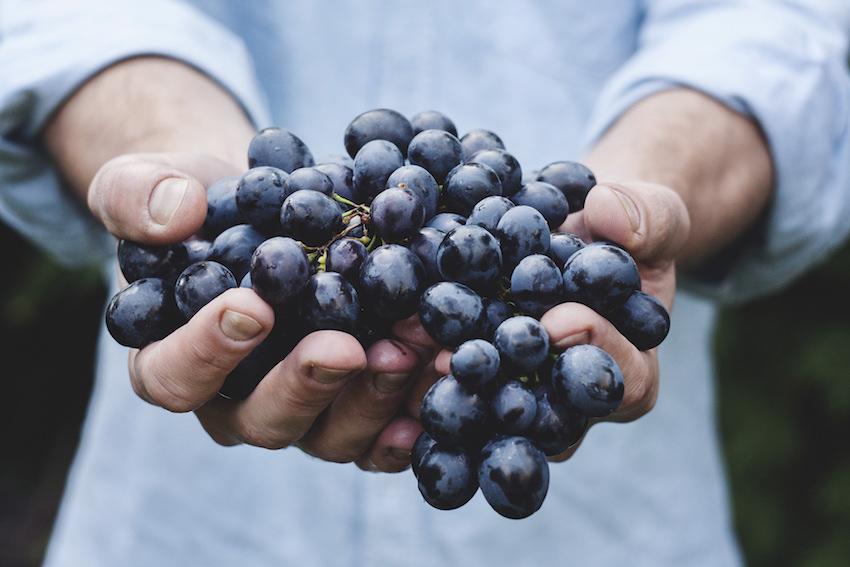 Tenth Harvest